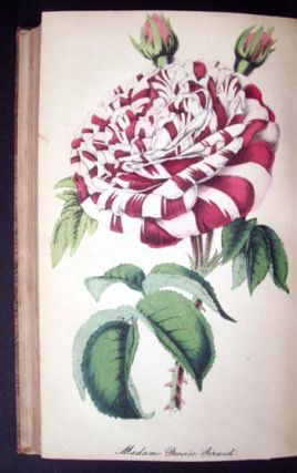 The Floricultural Cabinet and Florist's Magazine (January to December, 1853